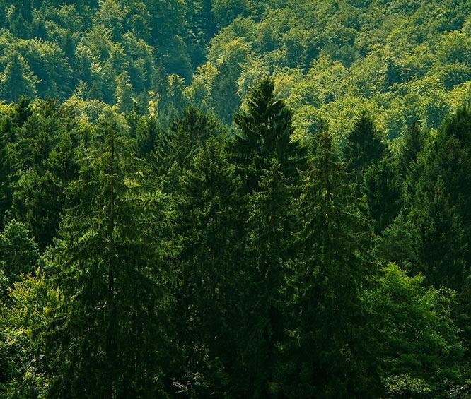 skog for bærekraftige dører